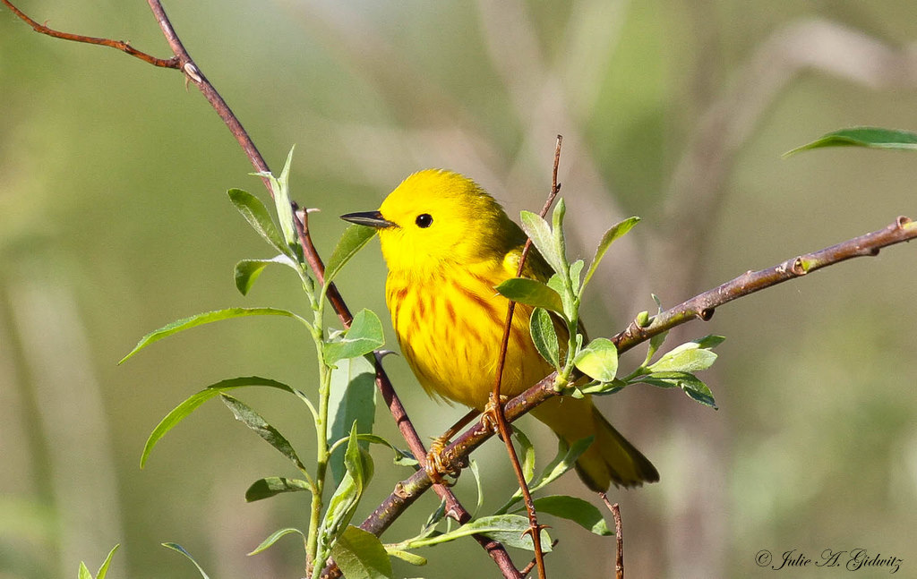 cute photo of bird